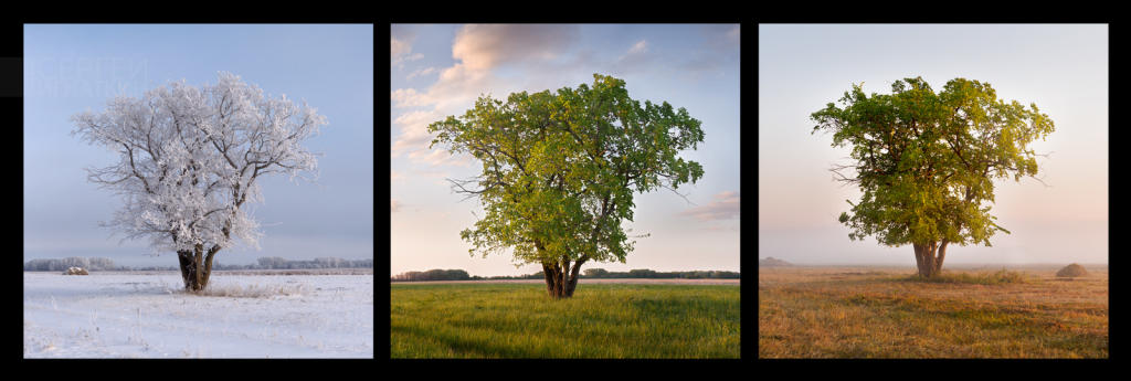 TreeComp3